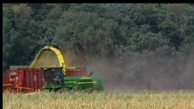 Corn crop suffers as drought continues
