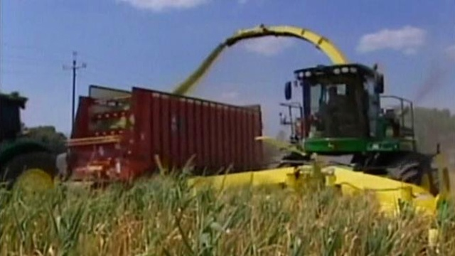 Farmers see big losses as they harvest crops