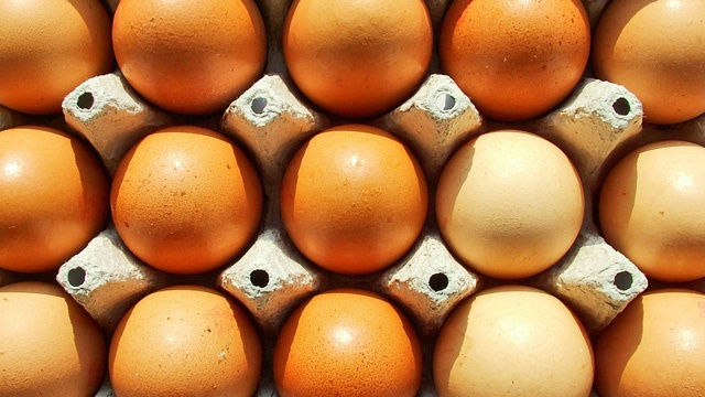 Wisconsin among 12 states launching new legal challenge to California egg law