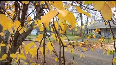 Group wants to stop city from uprooting fruit trees