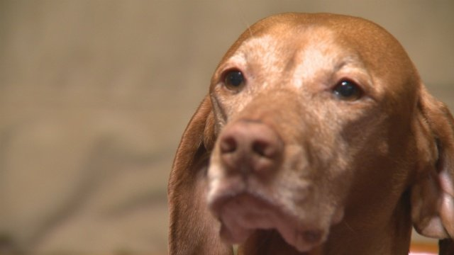 Dog lost on Thanksgiving Day returns home