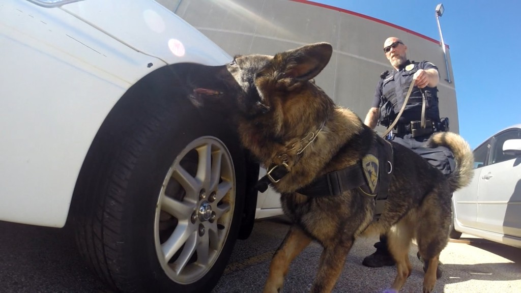 Fentanyl risk causes change to MPD K-9 use