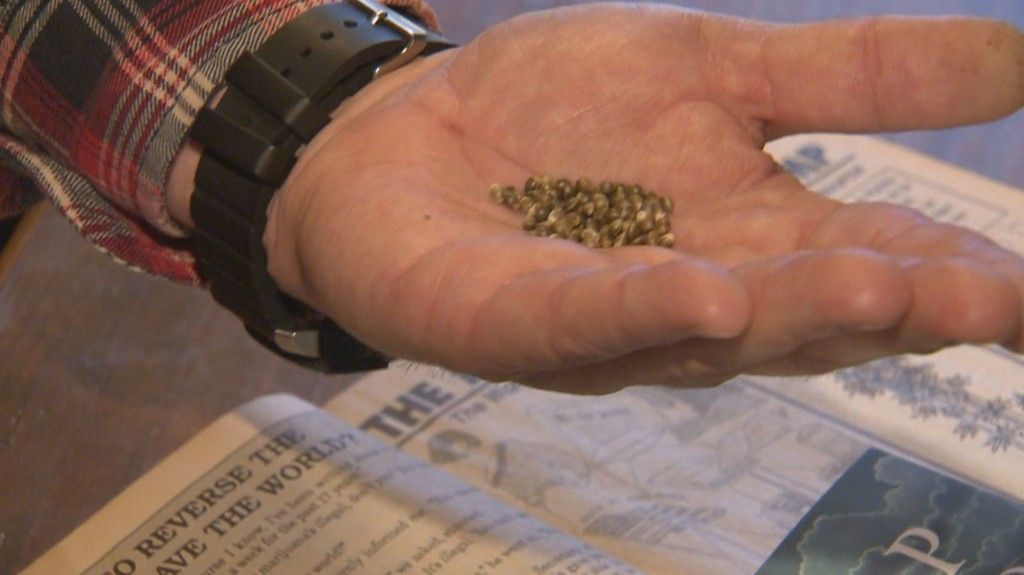 'It's going to help save this little farm': Dane County farmer to grow industrial hemp for CBD oil