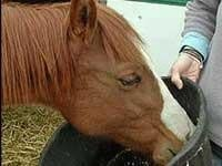 23 mistreated horses up for adoption in Pleasant Prairie