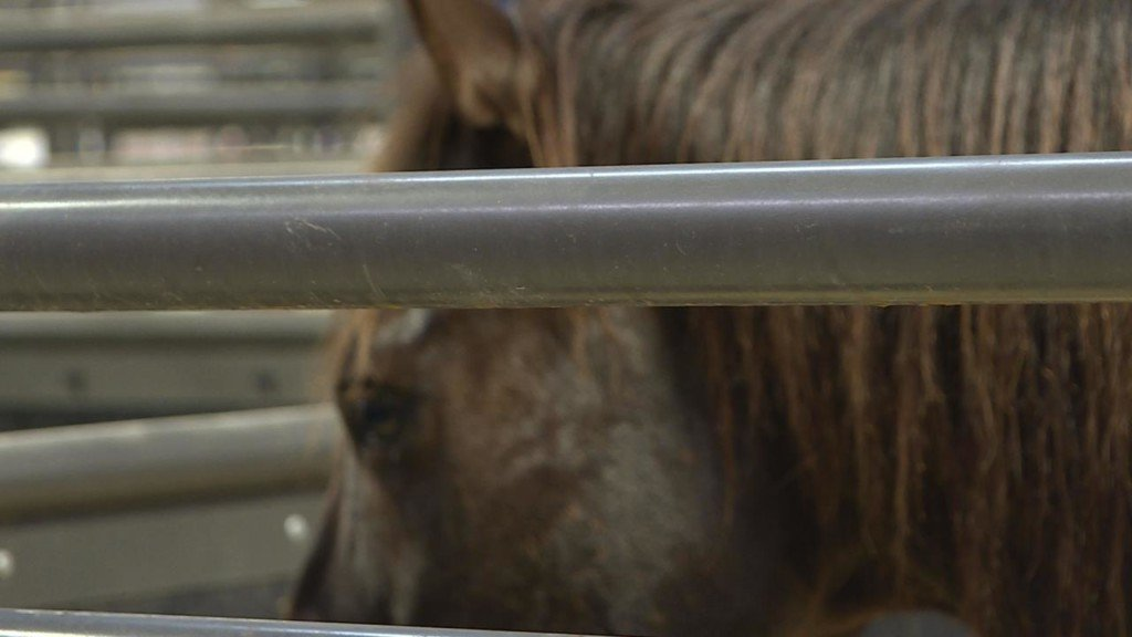 Safer stalls part of this year's Midwest Horse Fair following 2016 accident