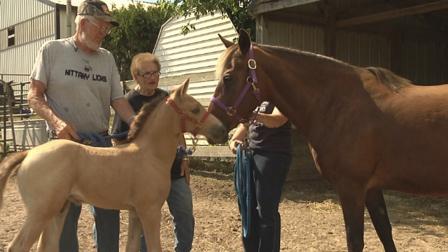 Humane Society hopes to expand horse care