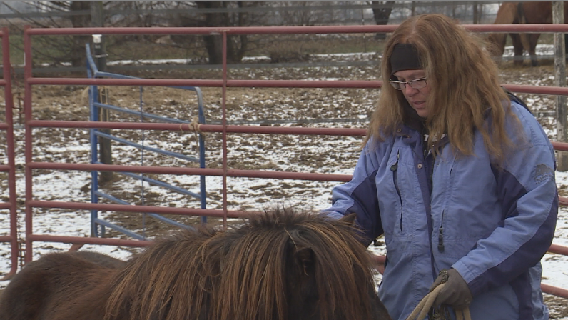 Town of Janesville woman given until April 1 to find homes for 23 horses