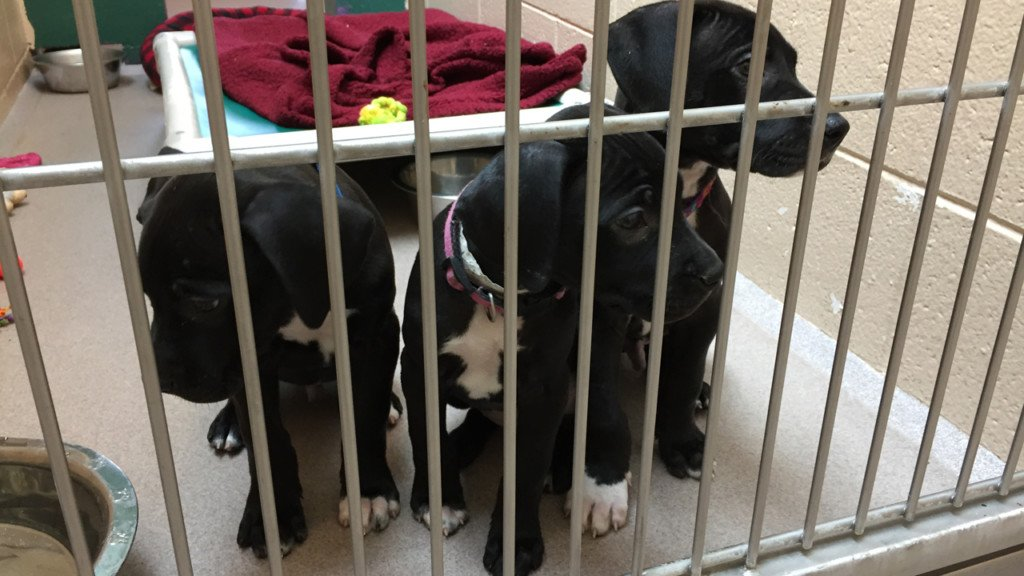 Dane County Humane Society now part of ASPCA transfer program