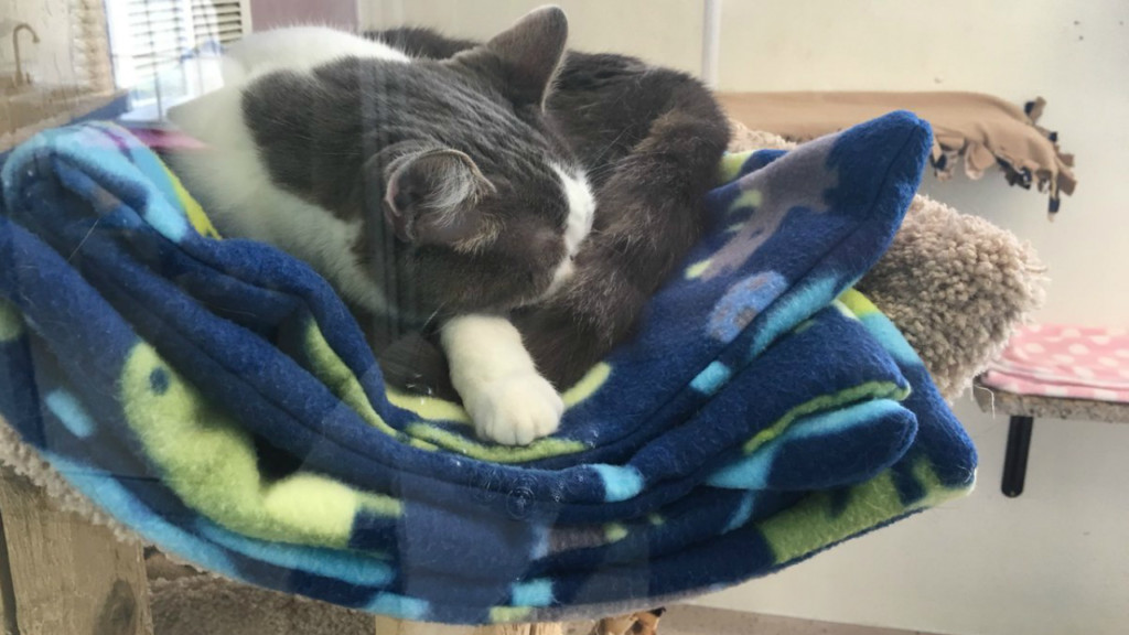 Humane Society holds listening session to hear input on new shelter