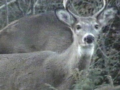 Committee finalizing CWD recommendations