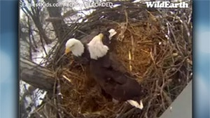 Eagle cam gives elementary students a different way of learning