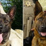 Sheriff's Office welcomes 2 new K-9s to the force
