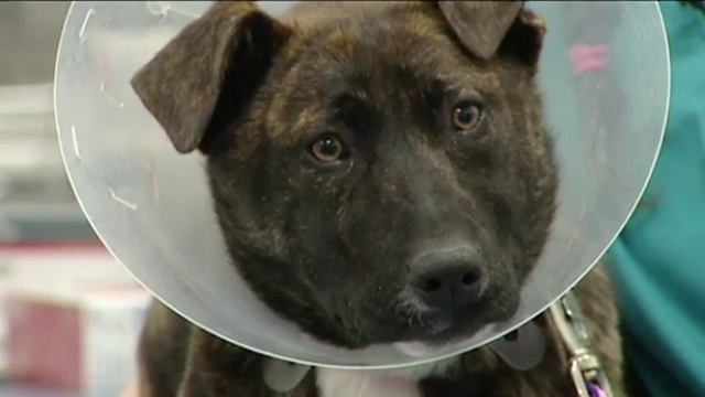 Rescue group, vet help rehabilitate intentionally burned dog
