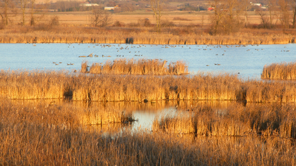 DNR officials warn waterfowl hunters to take caution as water levels rise