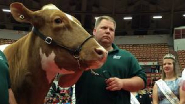 Cancer patient's cow wins award at World Dairy Expo