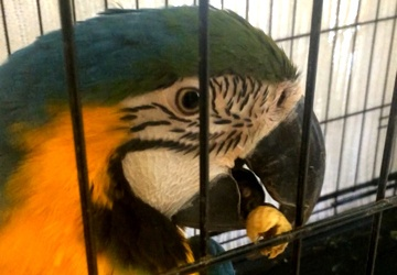 14 birds among pets rescued from burning trailer