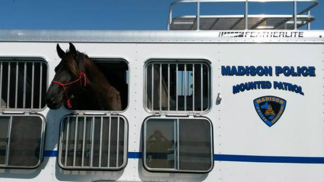 8-year-old horse expected to join city's mounted patrol unit
