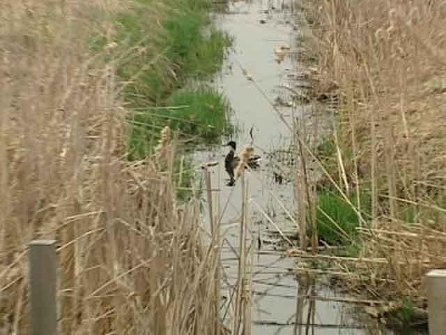 DNR sets hearing on new wetlands permit