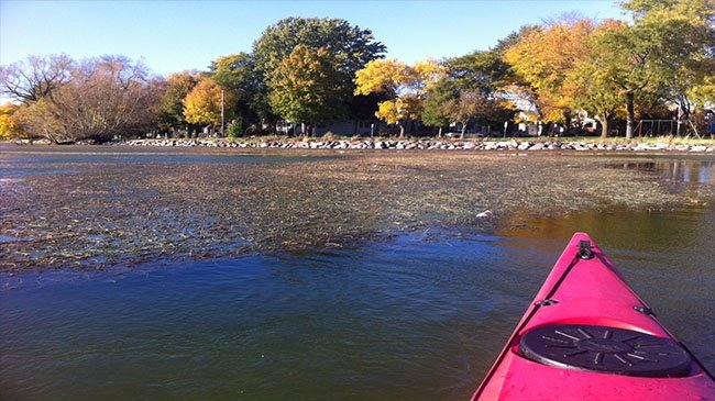 No silver bullet for improving Madison lakes