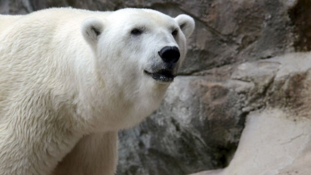 Zoo gets big donation to help bring bears back