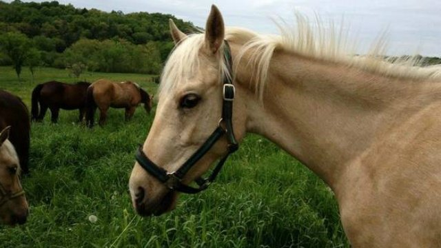 Missing therapy horses found dead in Baraboo River