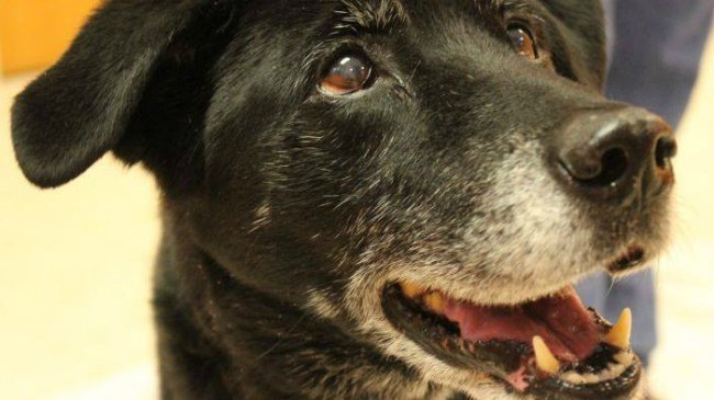 Family: Dog who survived beating passes away with foster family