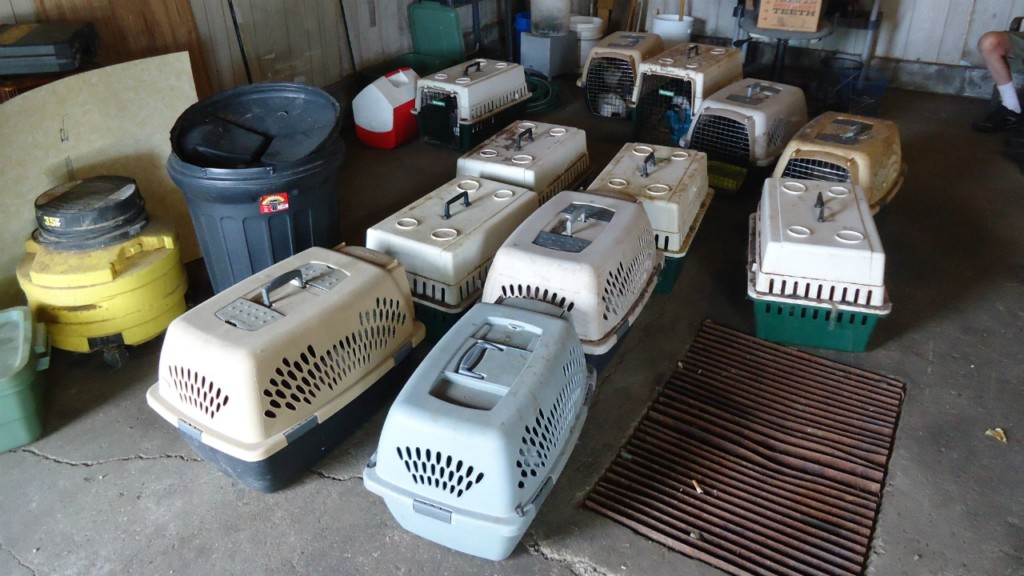 Monroe officials discuss animal hoarding ordinance after 92 cats seized