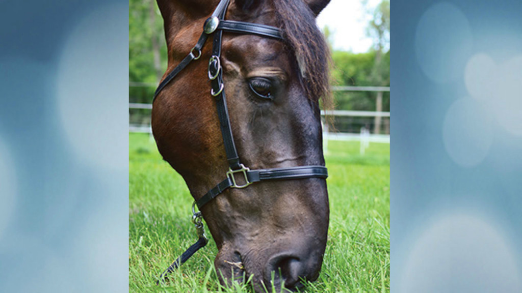 Can you help? MPD horse Cooper needs new sponsor