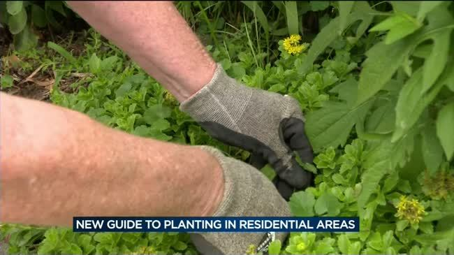City of Madison releases new guide for planting in residential lawns and terraces