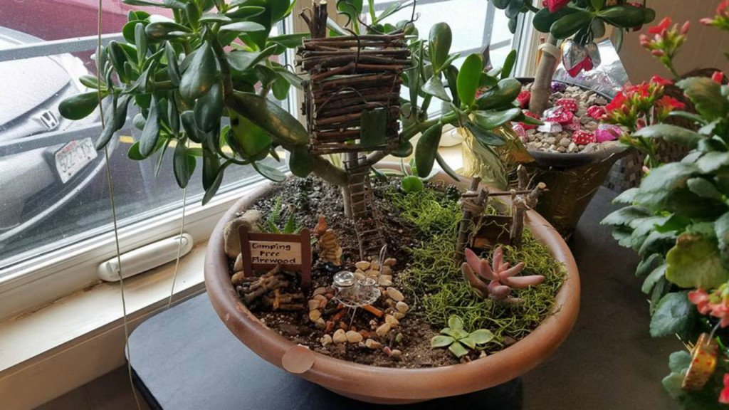 Woman says plant sale for charity still happening, even after her plants died during polar vortex