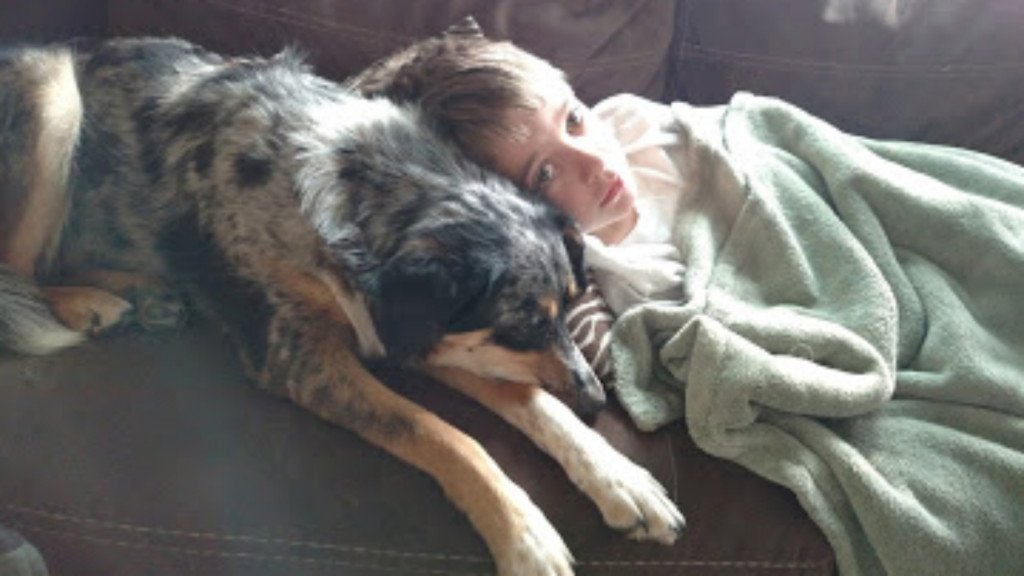 Lafayette County family looks for justice after 3 dogs found dead