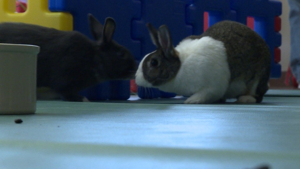 'Hoppy Hour' promotes adult rabbit adoption