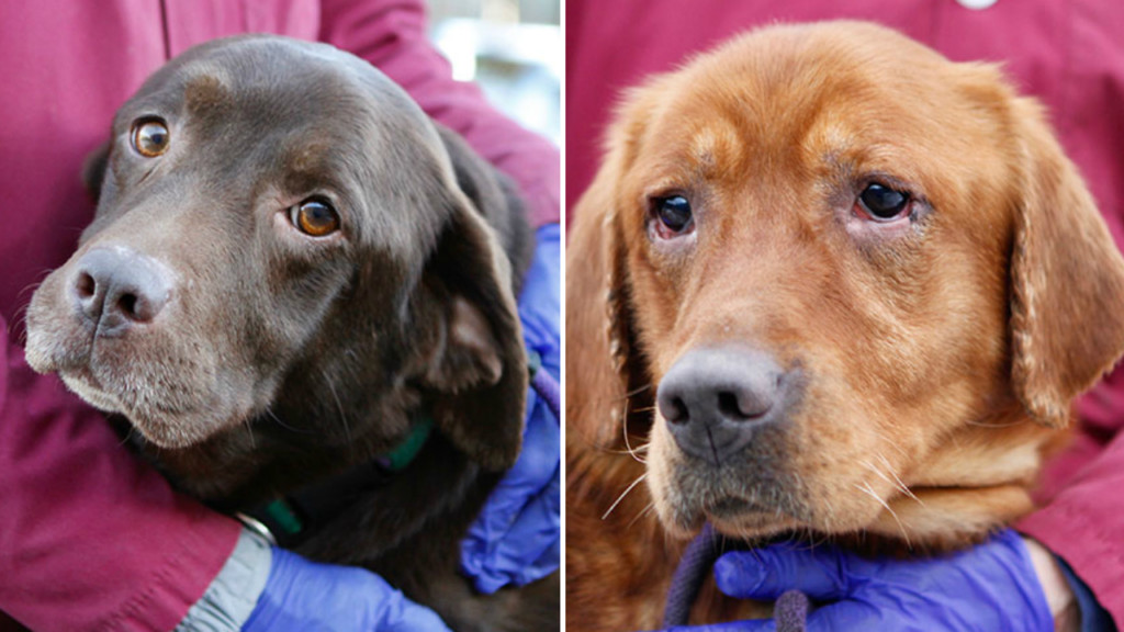 DCHS partners with other shelters to rescue 49 dogs from former breeder
