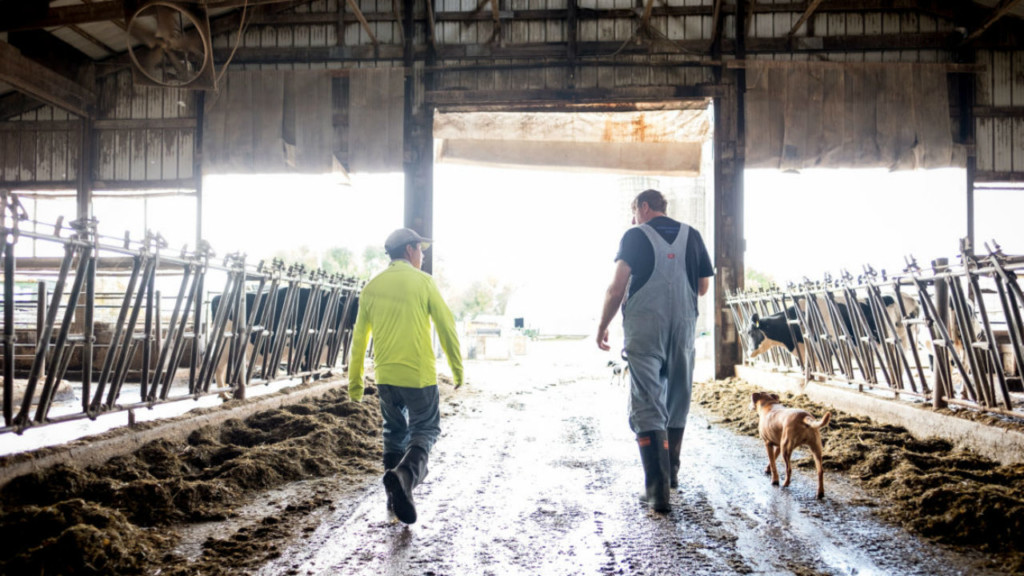 As Trump disparages immigrants, Midwest dairy farmers build bridges to Mexico