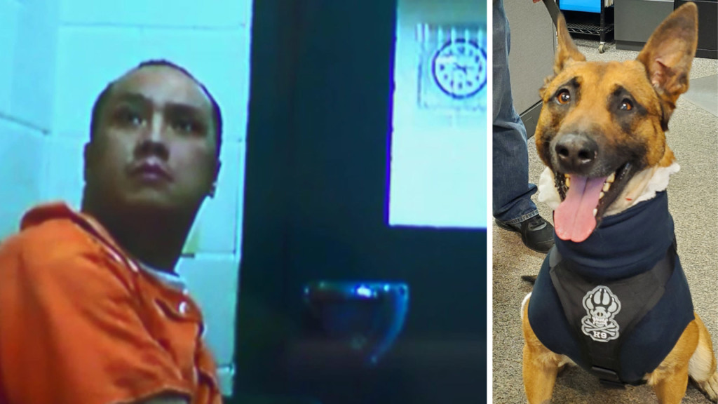 Judge: Man who stabbed police dog competent to stand trial