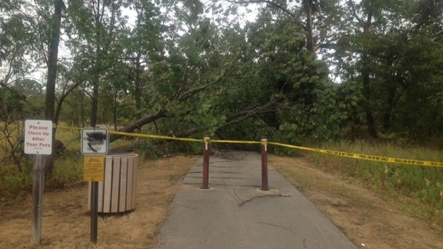 Downed oak trees make a mess in Sauk City