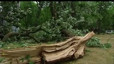 Storms topple trees, damage structures in Sauk City