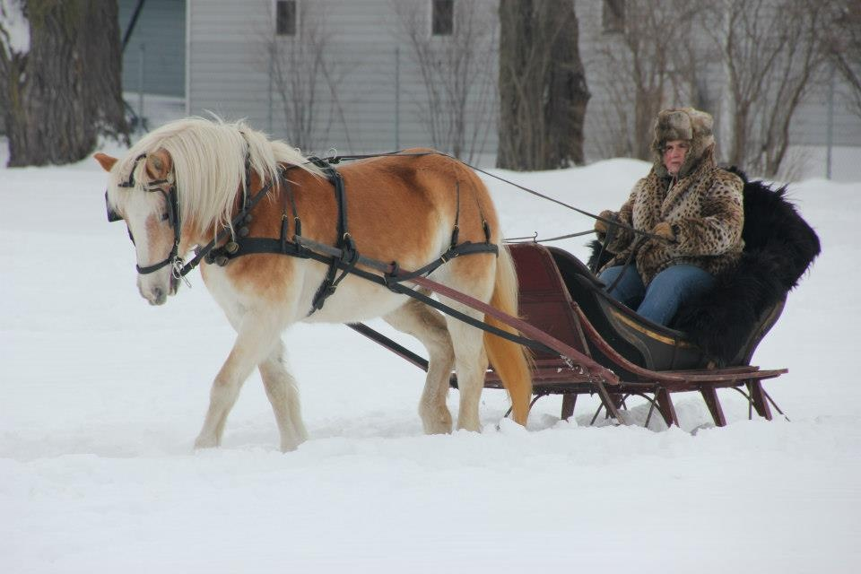 Columbus to host sleigh rally, model horse show