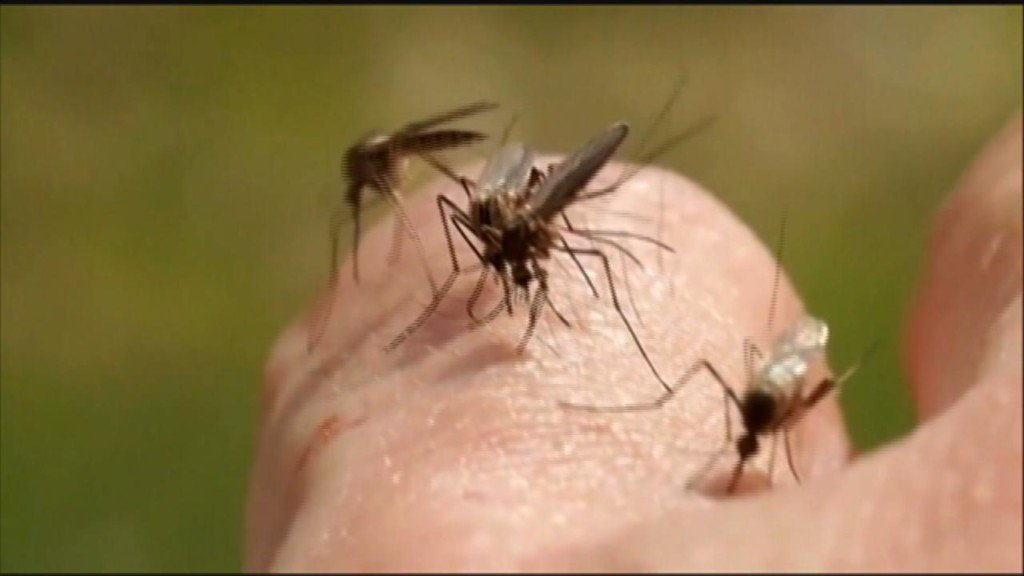 Entomology expert: Rainy weather sets up potential for 'epic' mosquito season