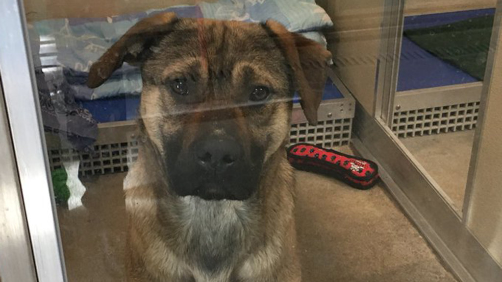Humane Society takes in dogs rescued from South Korean meat farm