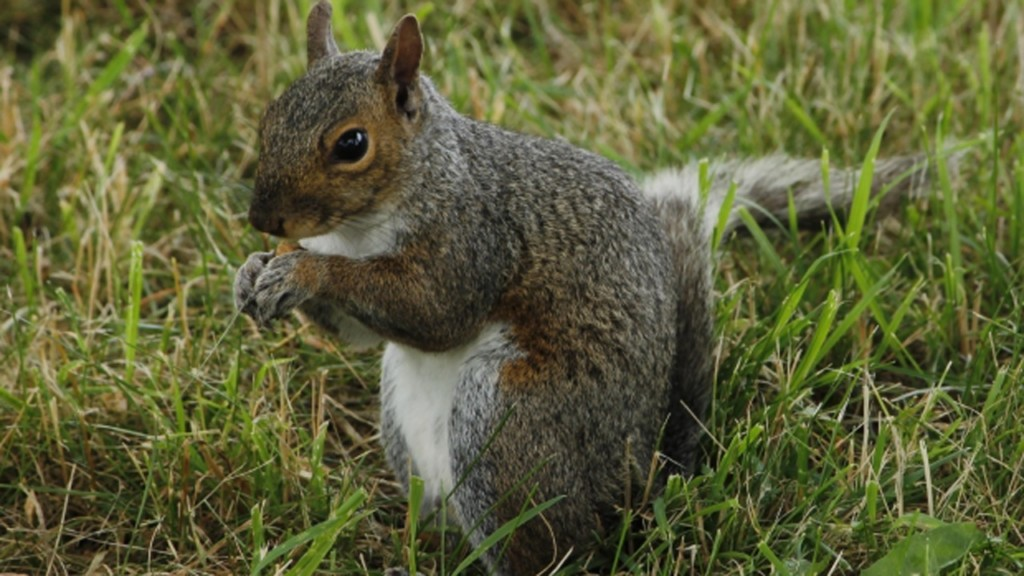Squirrel likely cause of loud noise that locked down Beloit school