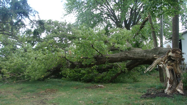 Storms cause damage in Grant County
