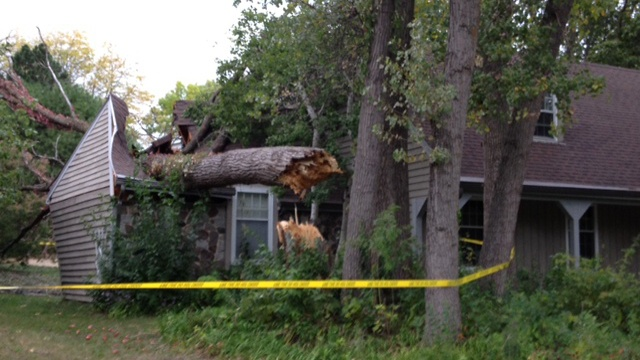 Tree falls on Madison home