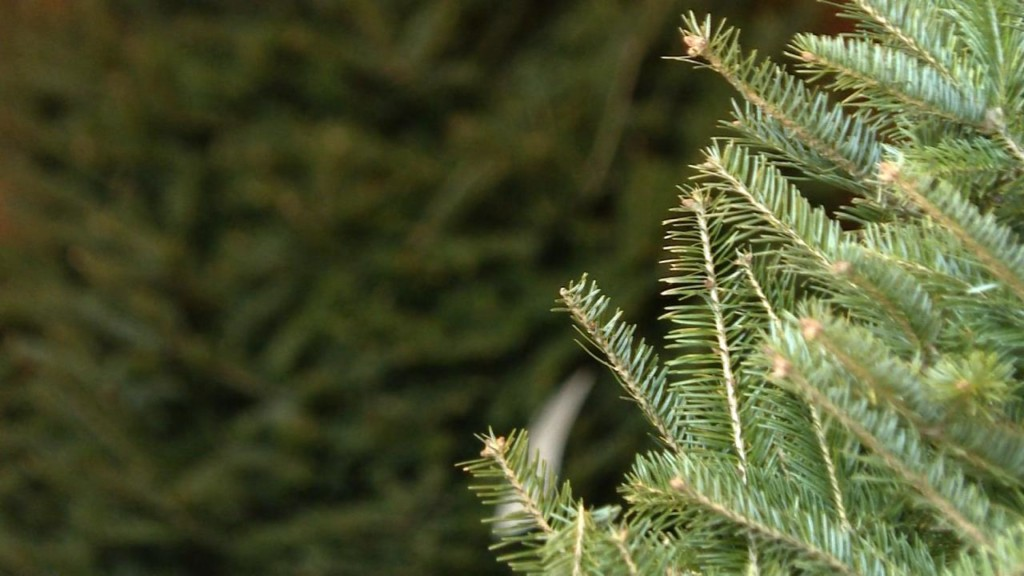 Assembly declares evergreen is Christmas tree