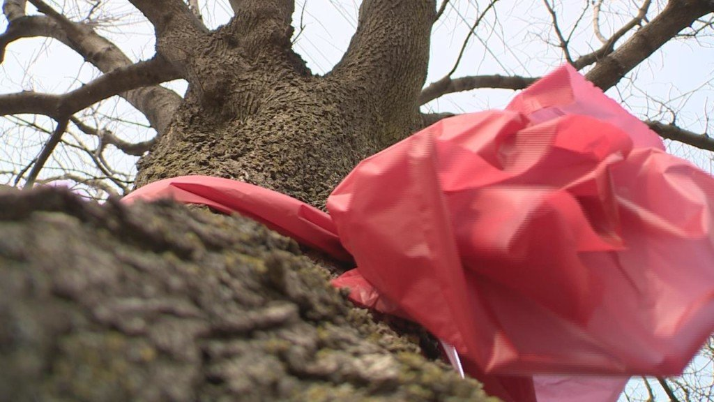 Call for Action: Power company to cut down trees near lines instead of trimming them