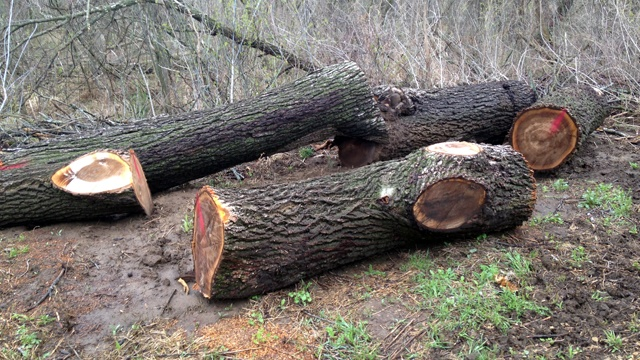 Warning issued about tree bandits