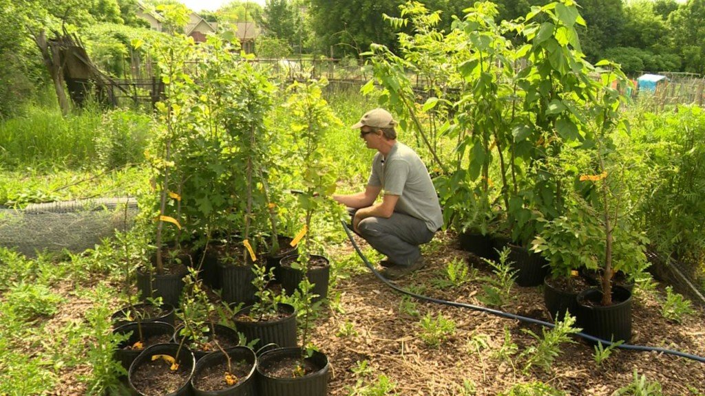 Tonight at 10: Local nonprofit works to improve urban canopy, remove barriers from planting trees