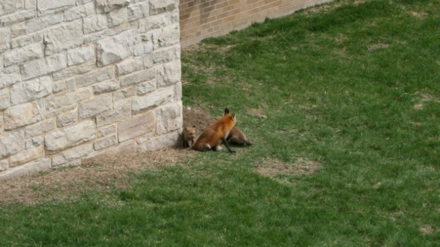 Help name the #UWFoxes living on campus