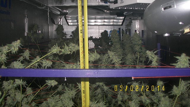 Man arrested for 'sophisticated' marijuana grow operation