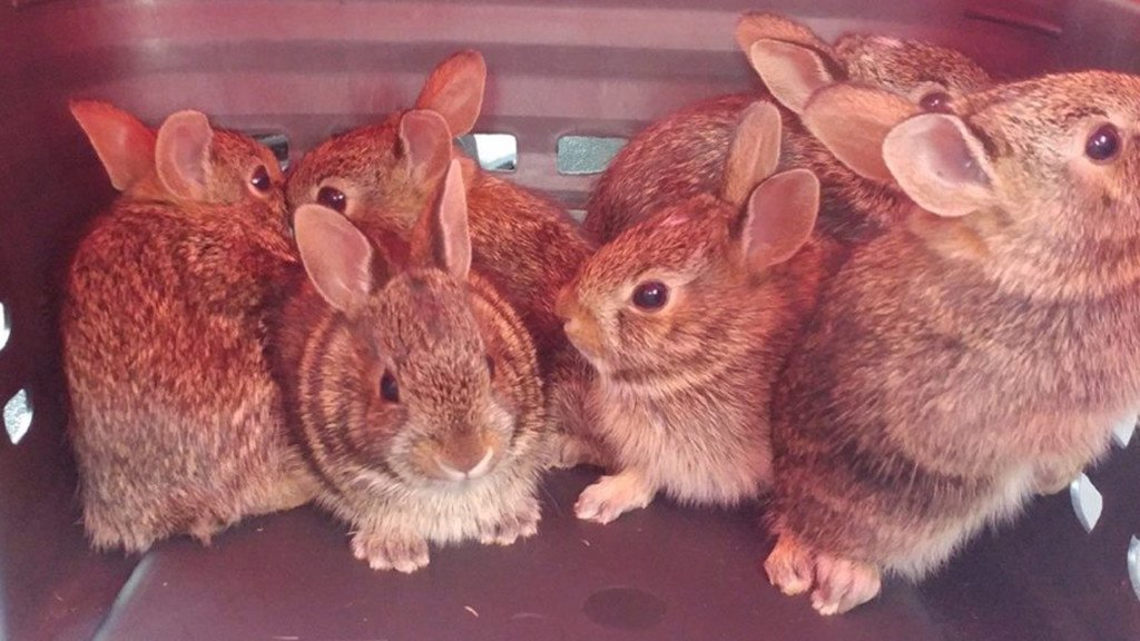 Police rescue 6 bunnies from window well